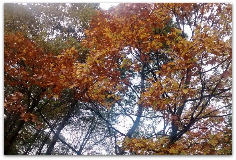 Jesienią...            Fot. Agata Lubańska