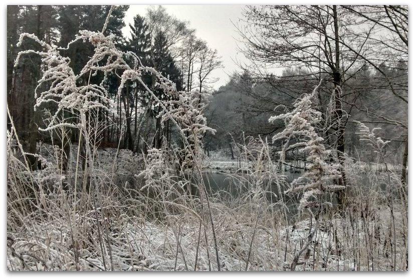 Waldwiza zimą               Fot. Agata Lubańska